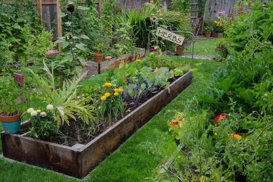 Weight Loss Vegetable Garden
